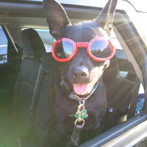 Someone got new Doggles! by Michael_Lehet