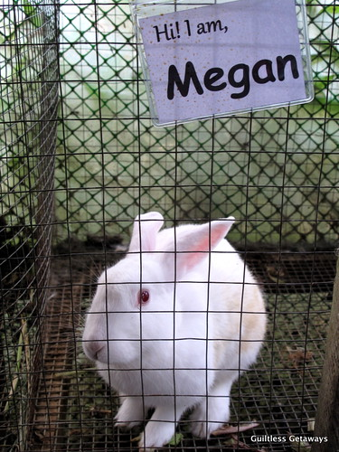 white-rabbits-used-in-organic-farming.jpg