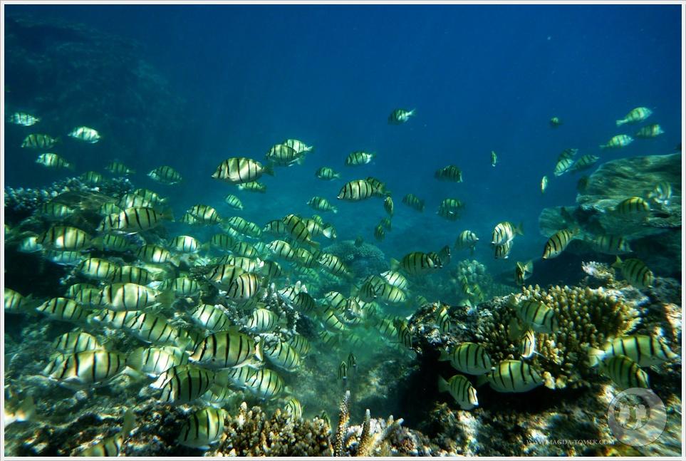 2012 07 23_Magda i Tomek Dookola Swiata_Fiji_P1040951