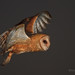 Barn Owl in Flight by Beth Sargent