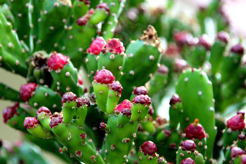 El tiempo por si mismo plantas crasas - Plantas crasas colgantes ...