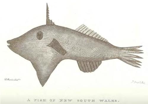 Daniel Butler Fish 1