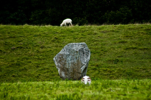 Avebury - Sheep Among the Stones - 09-10-12