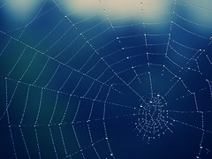 [Free Images] Backgrounds, Spider Web, Water Drop ID:201209211200