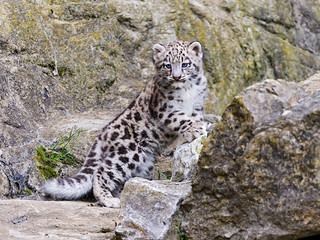 Mohan posing on the rock