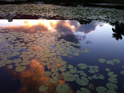 reflection sunrise pond lilypads timeless iphone 2012366 dailyphoto12