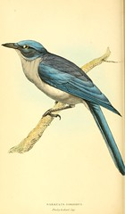 sketch(0.0), roller(0.0), animal(1.0), branch(1.0), wing(1.0), fauna(1.0), drawing(1.0), illustration(1.0), bluebird(1.0), blue(1.0), jay(1.0), beak(1.0), bird(1.0),