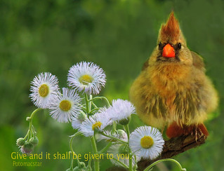 Give and it shall be given to you. Hanging out to dry. Cardinal.