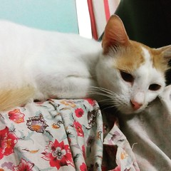 Cats of Malabar