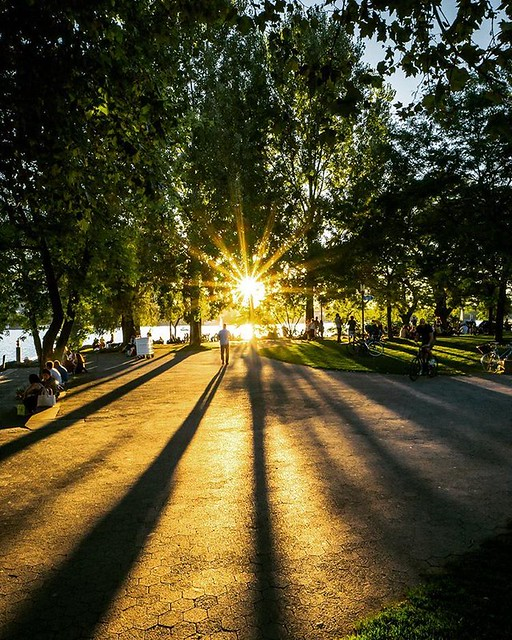 Light and shadow.  Sunset at the lake of Zurich.