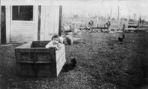 """The box was used as a playpen while mother was helping with the milking"" - Eungai Creek, NSW, C.R. Jarvis"