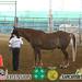 Horse Western 1 & 2