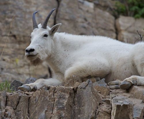 Mountain Goat Lounge