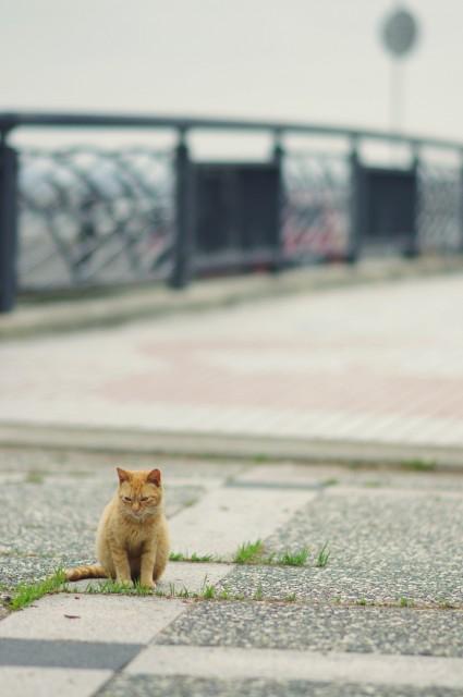 cat (59)