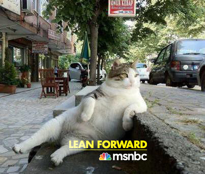Lean Forward... like a fat cat on a curb with MSNBC [pic]