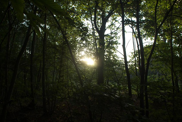 DSC_4372 Early morning in the woods