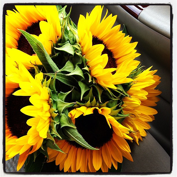 Bought a bunch of sunflowers from the Amish!