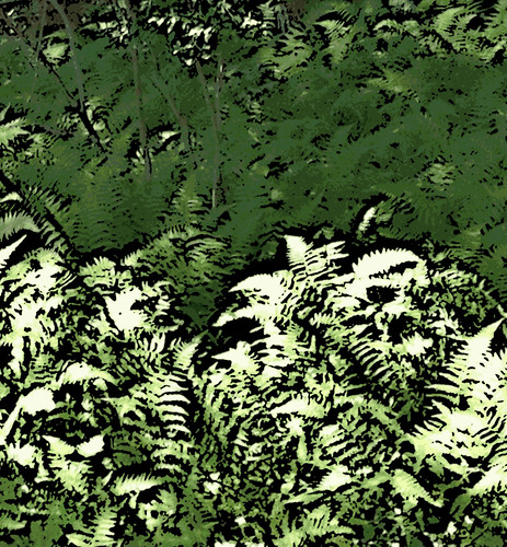 Ferns (Digital Woodcut) by randubnick