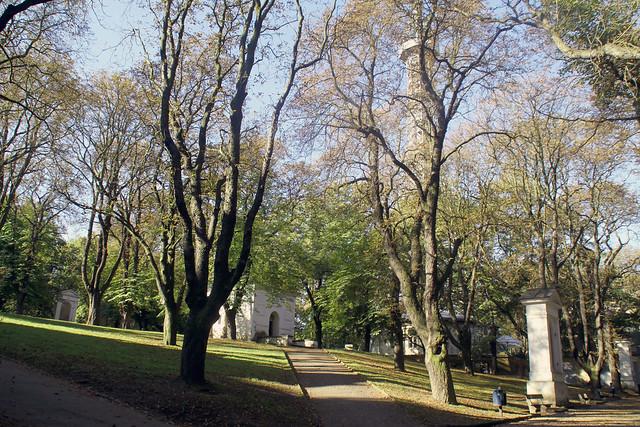trees slab petrin tower