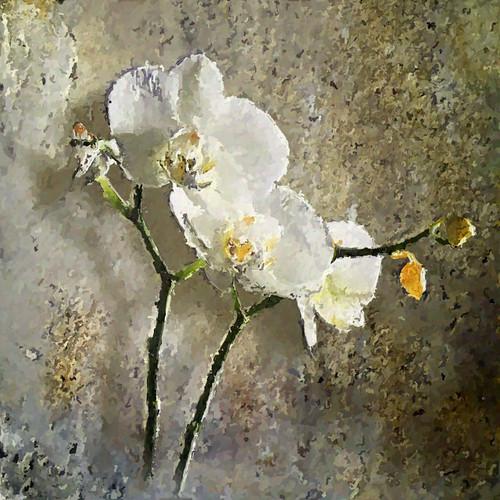 orchid flower digitalpainting impression impressionist digitalartwork thegalaxy texturesquared ★excellent★ àlamonet goldencrotalotexture □squarefotografiasparaenmarcar□1005