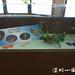 20120526 2012陽明山蝴蝶季-大屯遊客服務站(韓志武攝)DSC_3330