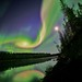 Aurora Over Whitehorse, Yukon