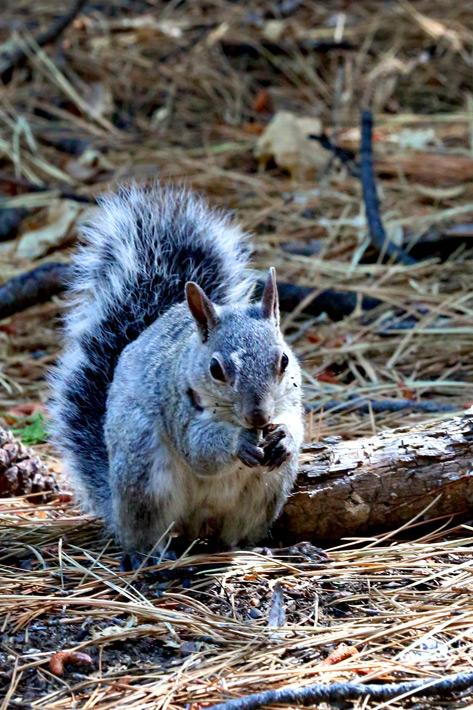 081412_03_squirrel