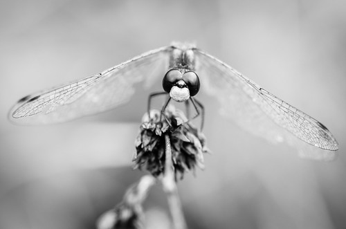 2012 09 08 Dragonfly 005
