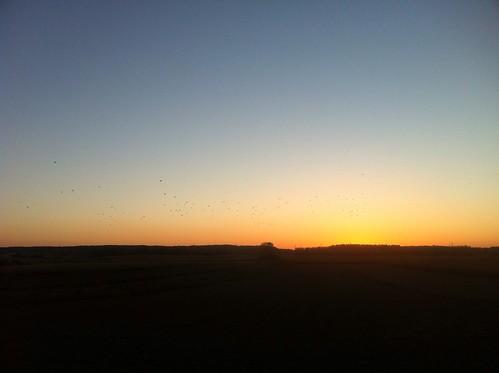 sunset summer sun field koprivnica