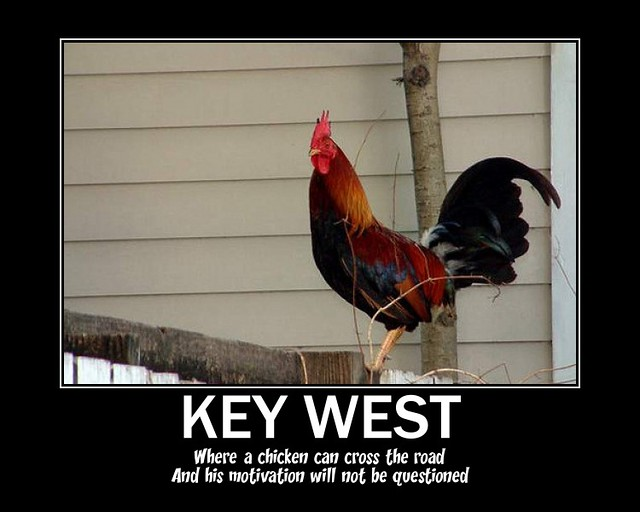 Key West Chickens | Flickr - Photo Sharing!