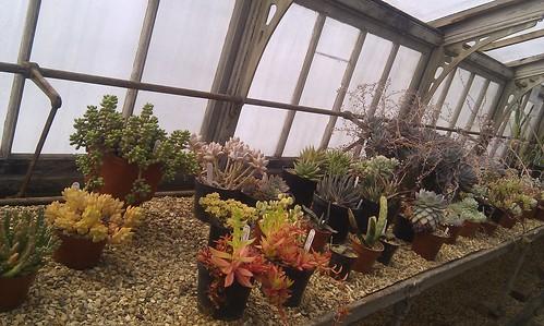 Cacti greenhouse at Luton Hoo Walled Garden