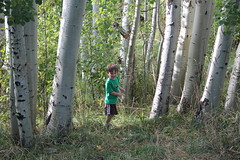 A little boy in the Aspen trees