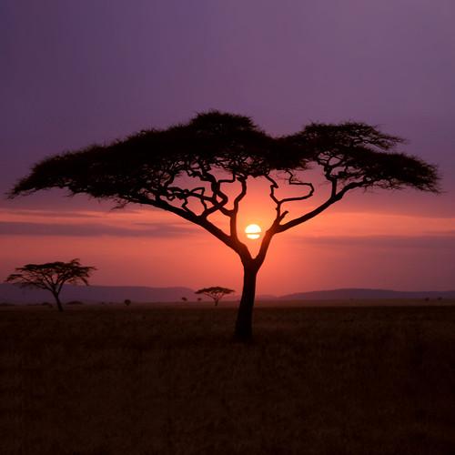 [フリー画像素材] 自然風景, 朝焼け・夕焼け, 樹木, 太陽 ID:201209281800