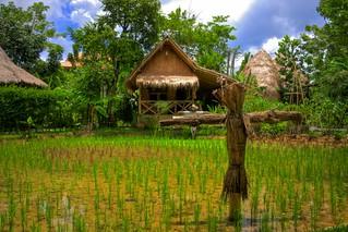 Rice Farm - ????? ????????? ???? ????
