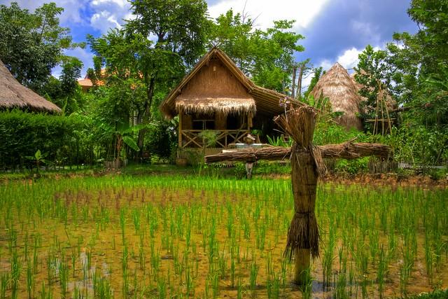 Rice Farm - تصوير عبدالعزيز جوهر حيات