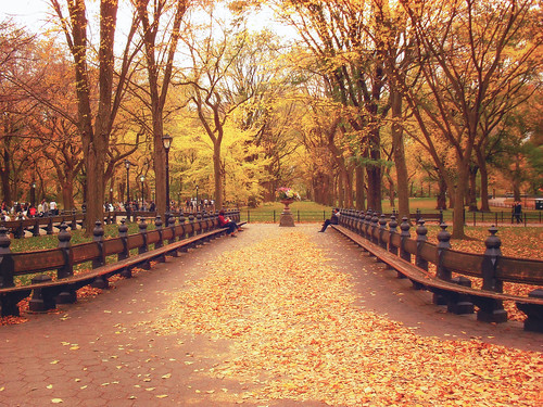 Autumn Leaves - Central Park - New York City
