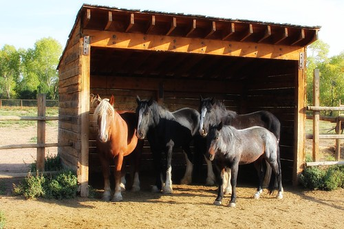 Four Rock Ledge Ranch Equines