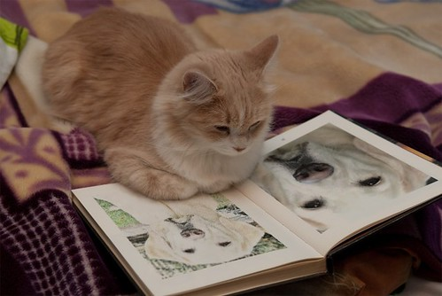 cat reading a book about dogs