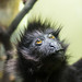 Best primate by JerryBones