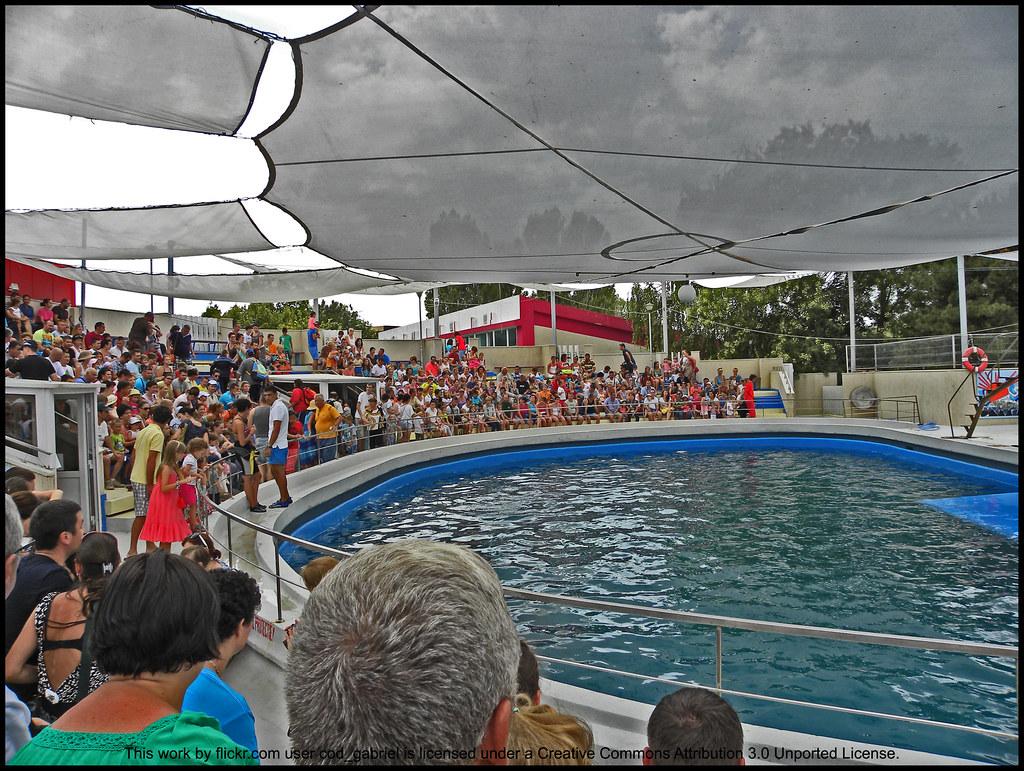 Constanta Dolphinarium - Free Photos fotoq
