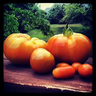 Today's #tomato harvest #containergarden #food #igrewit #salad