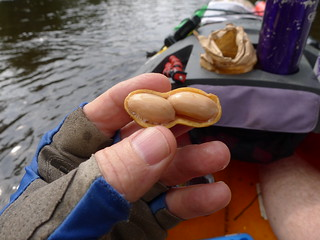 A nearly perfect boiled peanut