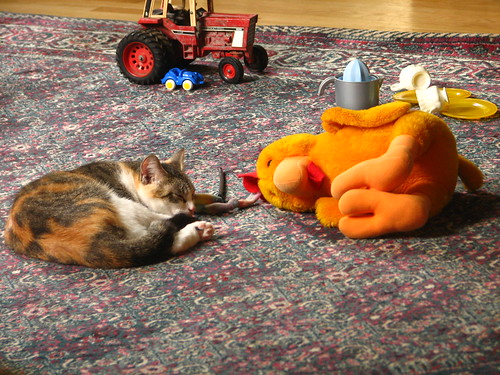 nap time for kittens and roosters