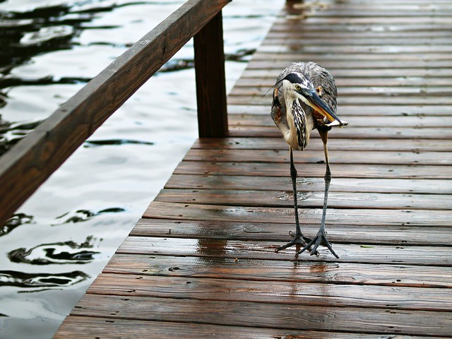 our fishing friend.
