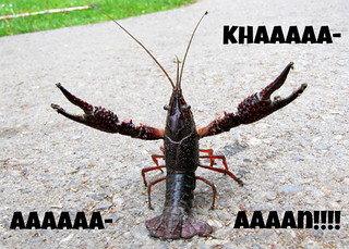 Belligerent crayfish Khan