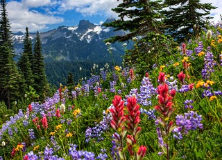 The Wildflowers of Paradise