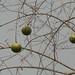Trees in Nigeria - IMG_2340_CR2_v1