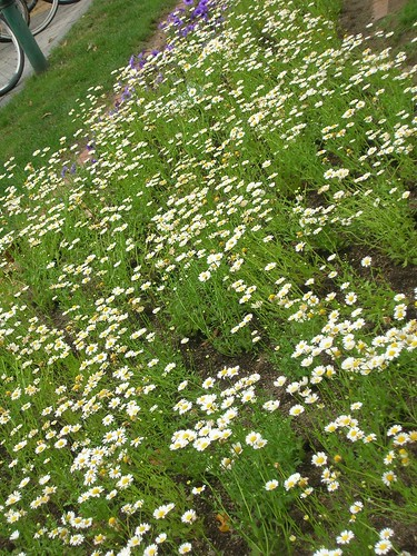 day3-odori-park-flower1