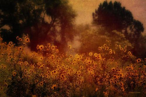 texture landscape digidi photoartistry prairiesunflowers magicunicornverybest myowntexturing artcityart