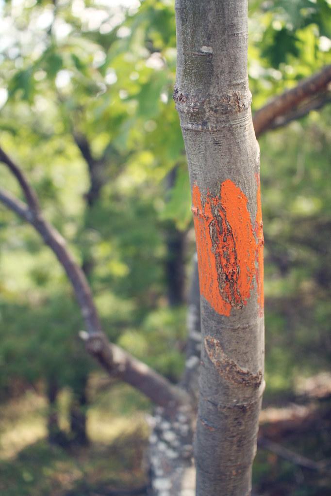 orange trail pain